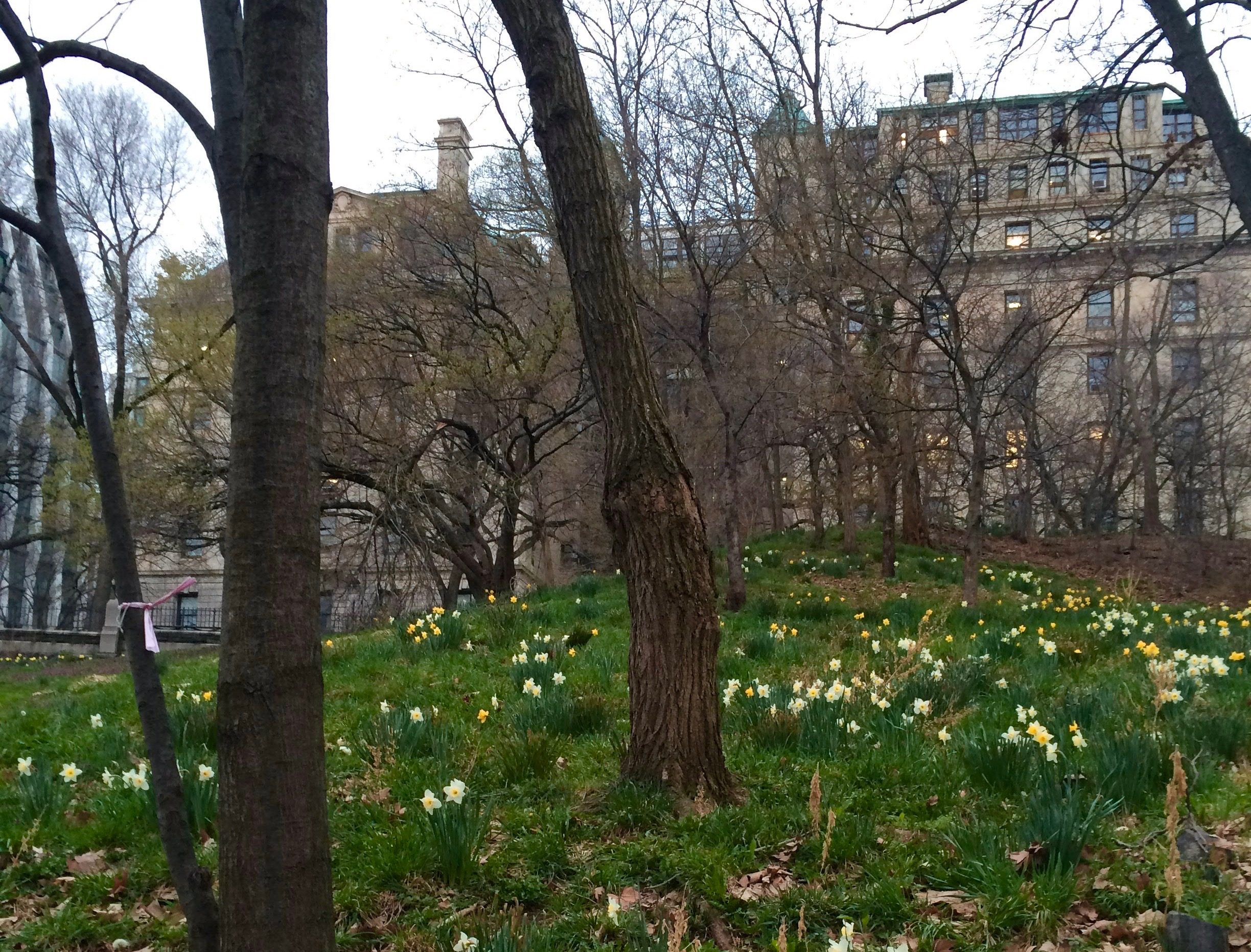 Spring in New York City