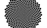 Sunflower Seed Pattern